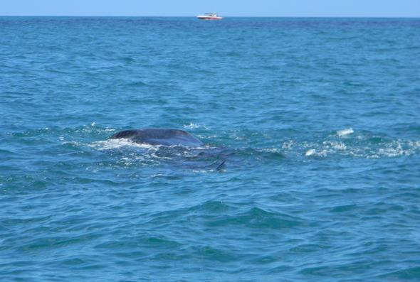 Auf geht's - der Walhai wartet... - (Urlaub, Sehenswürdigkeiten, Insel)