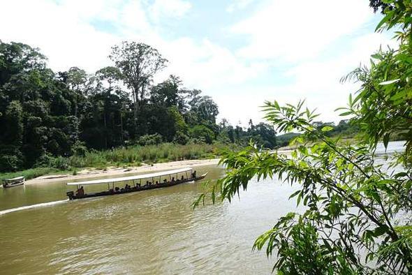 Per Boot durch den Taman Negara Nationalpark in Malaysia - (Natur, Malaysia, Bootsfahrt)