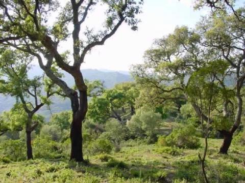 Los Alcornocales - (Spanien, Reiseziel, Wandern)