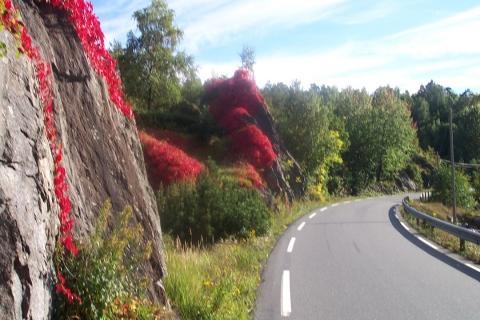 norwegen  idian sommer - (Skandinavien, Norwegen, Schweden)