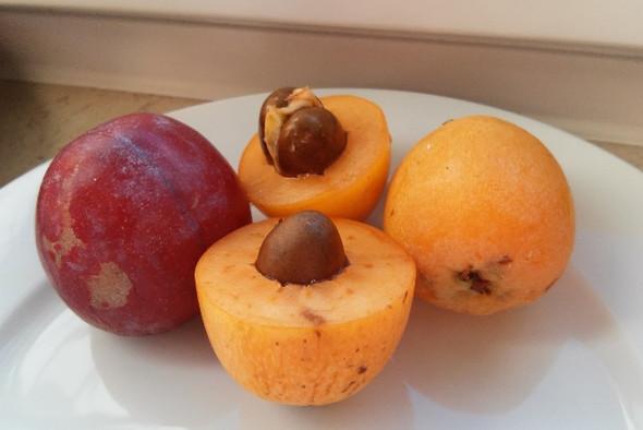 Mispeln - (Kapverden, Früchte)