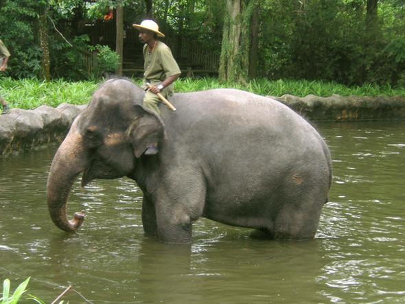 Tag-Zoo - (Thailand, Karibik, Strandurlaub)