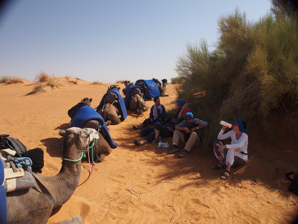 - (Reise, Marokko, Pferde)