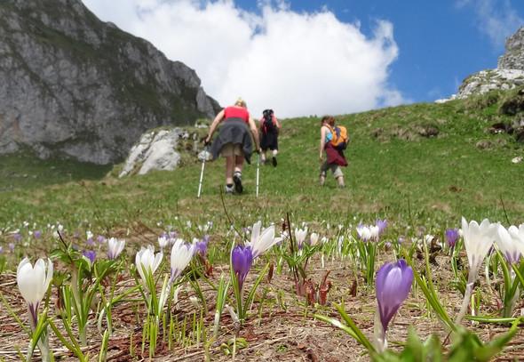 Wandern in der Nähe des Campingplatzes - (Frankreich, Schweiz, Campingplatz)