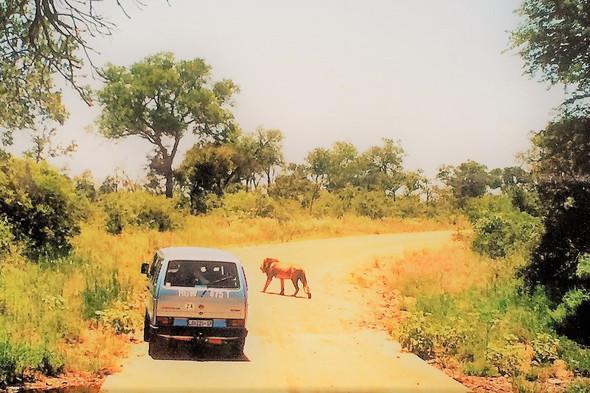 - (Suedafrika, Nationalpark)