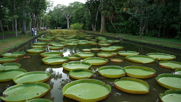 Botanischer Garten - (Reise, Essen, Geld)