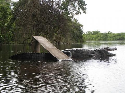 Alligator - Pampa - (Reise, Südamerika, Argentinien)
