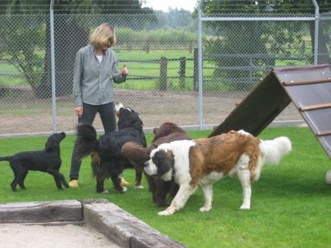 Meine Hunde auf der tollen Spielwiese - (Deutschland, NRW, Hund)