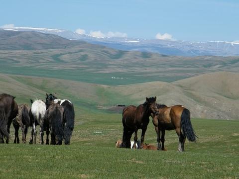 Pferde im Changai - (Asien, Flugzeug, Tiere)