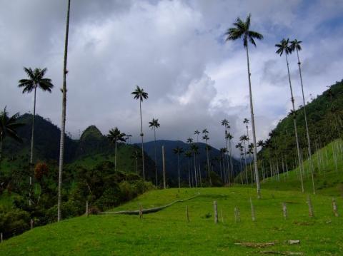 Cocora - (Südamerika, Lateinamerika, Natur)
