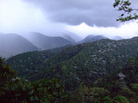 Regenwald - (Südamerika, Lateinamerika, Natur)