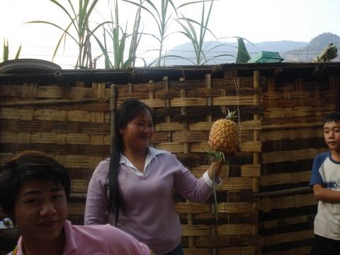 die Nachspeise frisch vom Feld - (Reise, Asien, Thailand)