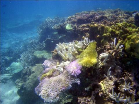 Cocos Beach - (Insel, Tauchen, Schnorcheln)