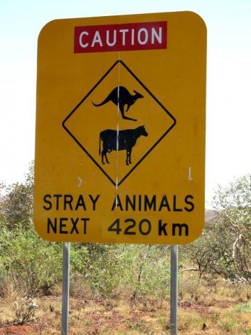 Wildwechsel auf 420 km - (Australien, Mietwagen, Ausrüstung)