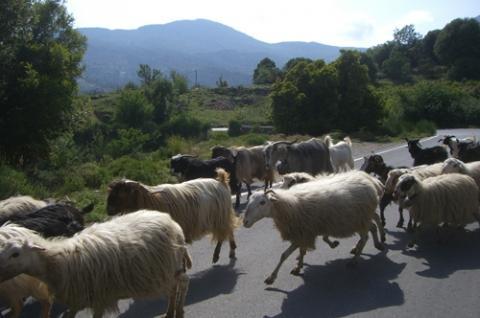 Kreta - (Europa, Wanderurlaub, Wanderinsel)