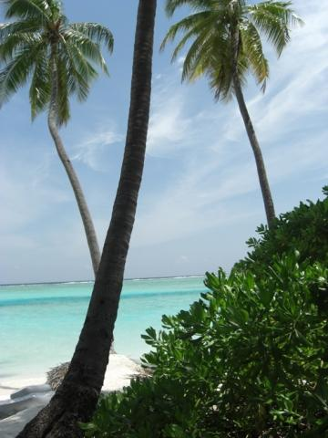Malediven - (Reise, Urlaub, Strand)