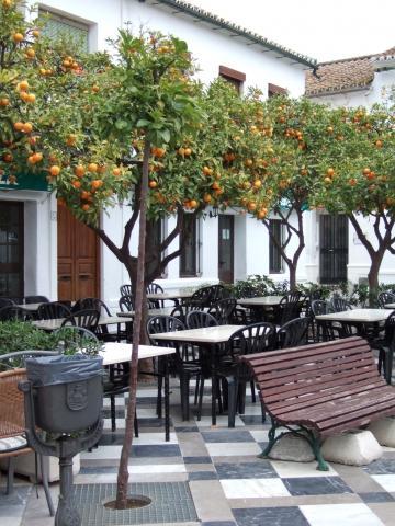 Orangenbäume an der Placa - (Europa, Spanien, Kultur)