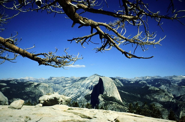 Wie heißt dieser Aussichtspunkt mit dem markanten Baum - (USA, Kalifornien, Yosemite)