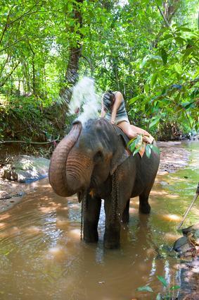 ... die Elefanten? - (Asien, Reiseziel, Thailand)